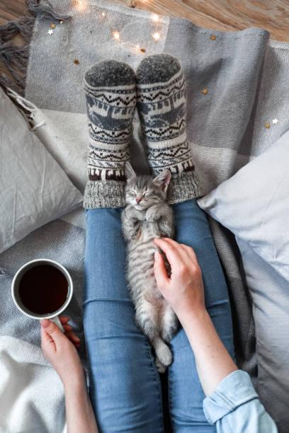kvinna som håller en kopp te medan du spelar med hennes katt - cozy at christmas bildbanksfoton och bilder