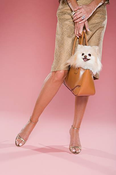 Woman holding a dog in a bag stock photo