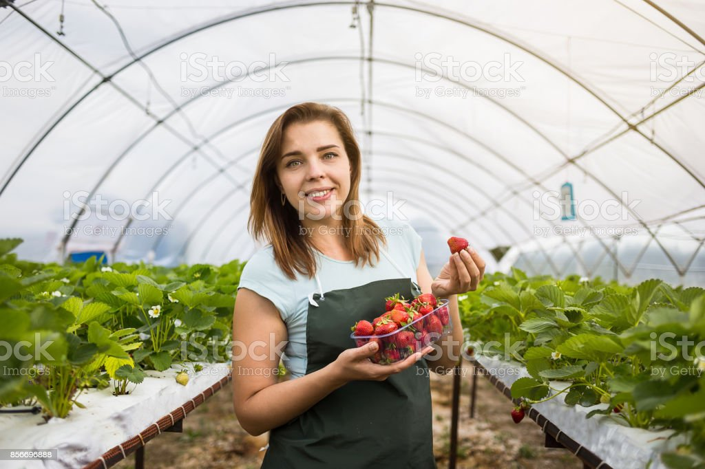 Woman holding a juicy bitten strawberry into the camera,strawberry in arm. Woman holding strawberry in hands in greenhouse,Female hand holding strawberry on blurred background,strawberry crop concept stock photo