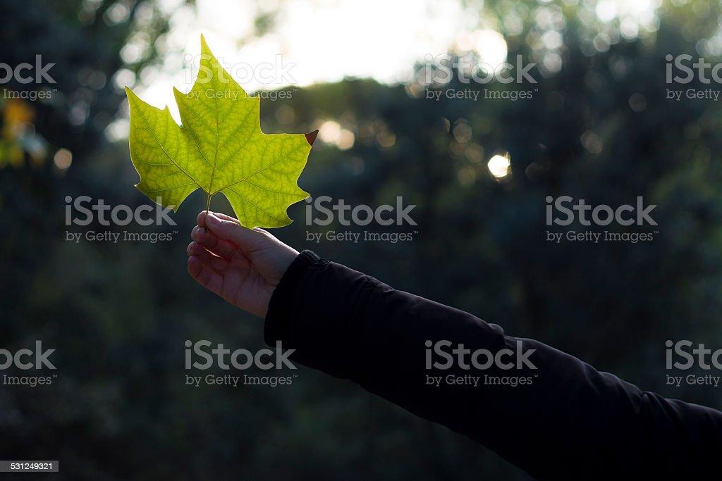 Mujer agarrando una hoja - foto de stock