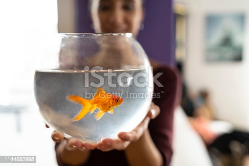 Gold fish in an aquarium, focus on foreground.