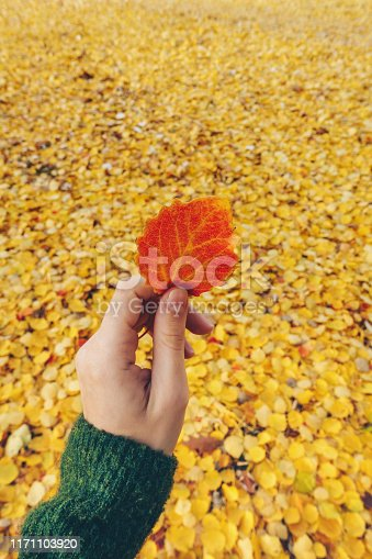 Woman's hand holding a red leaf