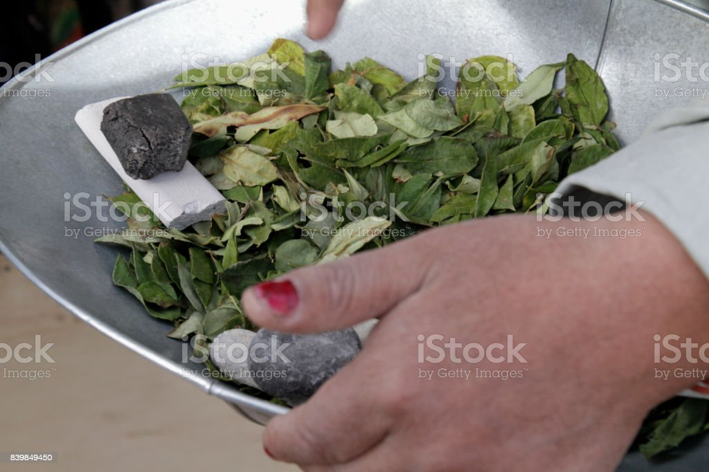 Woman holding bowl with coca leaves stock photo