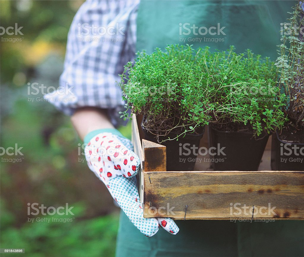 Woman holding box with plants her hands in garden center stock photo