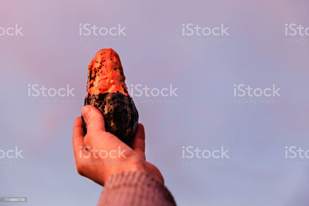 Woman Holding Decorative Pumpkin Against The Sky At Sunset stock photo
