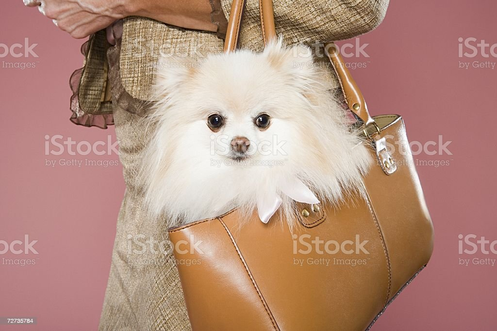 Woman holding dog in a handbag - foto de stock