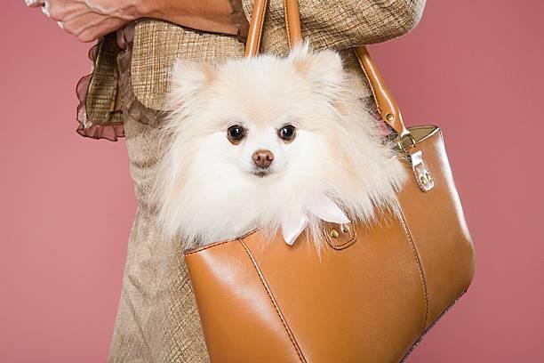 Woman holding dog in a handbag - foto de stock