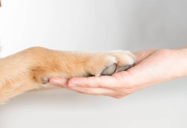 Woman holding dog paw picture id687187084?b=1&k=6&m=687187084&s=612x612&w=0&h=p3ymd ncdtcbqfia25wg1hryoqqbwvm0otxp ztnqfk=