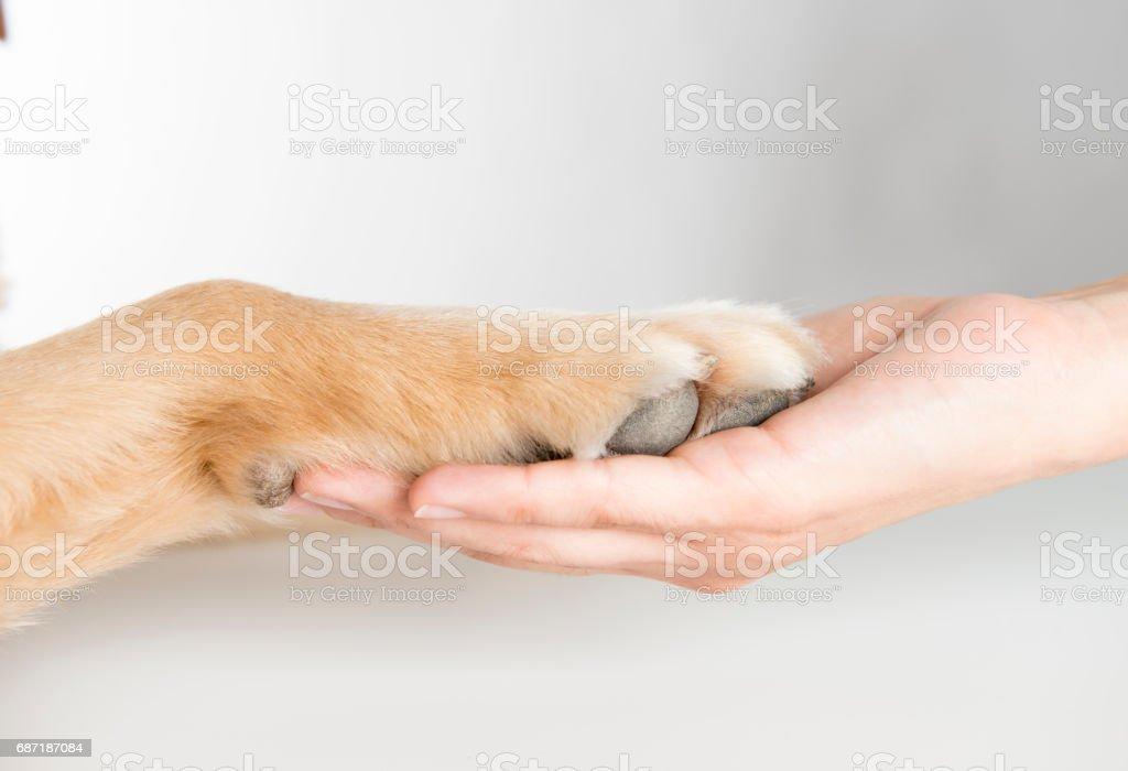 Woman holding dog paw stock photo