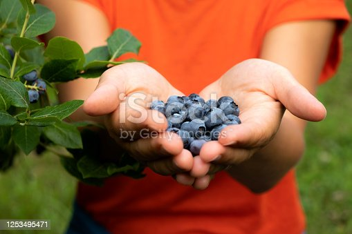 Woman holding fresh, organic blueberries in nature.