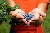istock Woman holding fresh, organic blueberries. 1253495471