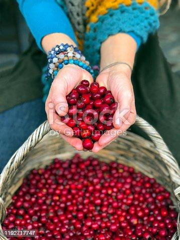A woman holding hawthorn fruit