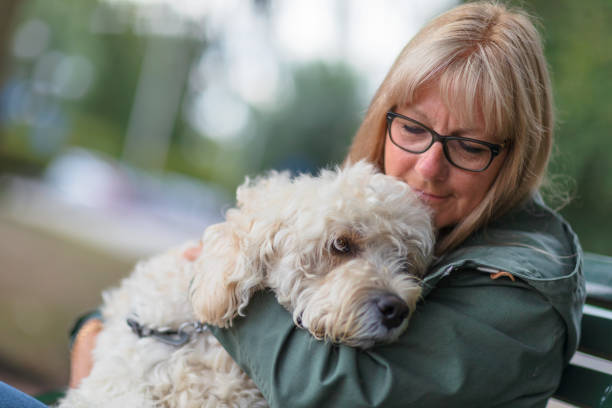 A woman holding her dog in her lap stock photo
