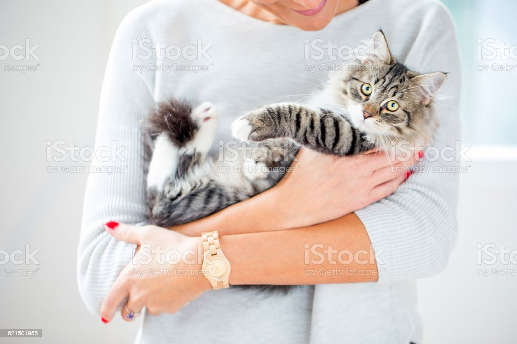 Woman Holding her Kitten stock photo