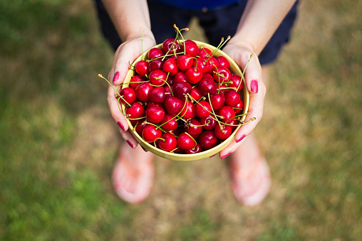 Woman holding in her hands a bowl of freshly picked sweet cherries.