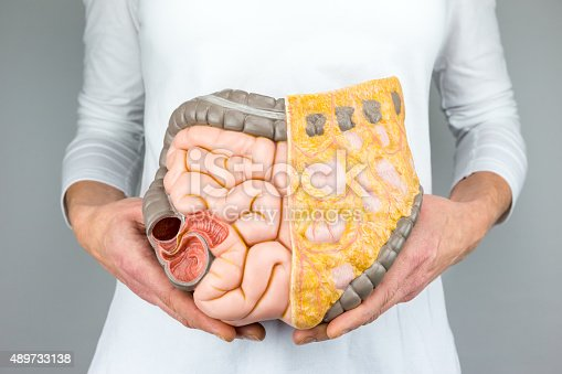 istock Woman holding model of human intestines in front of body 489733138