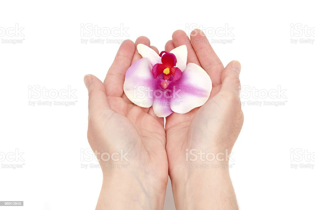 Woman holding orchid royalty-free stock photo