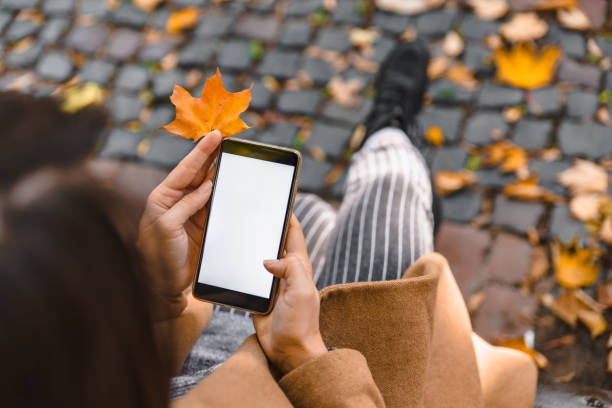 woman holding phone with white screen outdoors yellow maple leaf stock photo