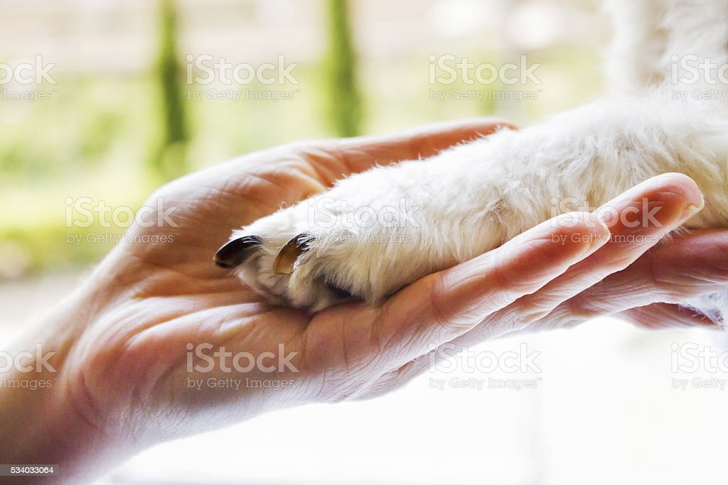 woman holding puppy's paw stock photo