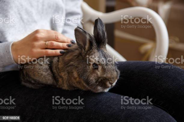 Woman holding rabbit or easter bunny picture id928166928?b=1&k=6&m=928166928&s=612x612&h=g kgn9izsafocs2sjlz8zyscys1rgbyduic9e4kfqis=