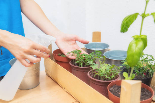 Mulher segurando a pulverização pode para refrescar os temperos cultivados em casa. - foto de acervo
