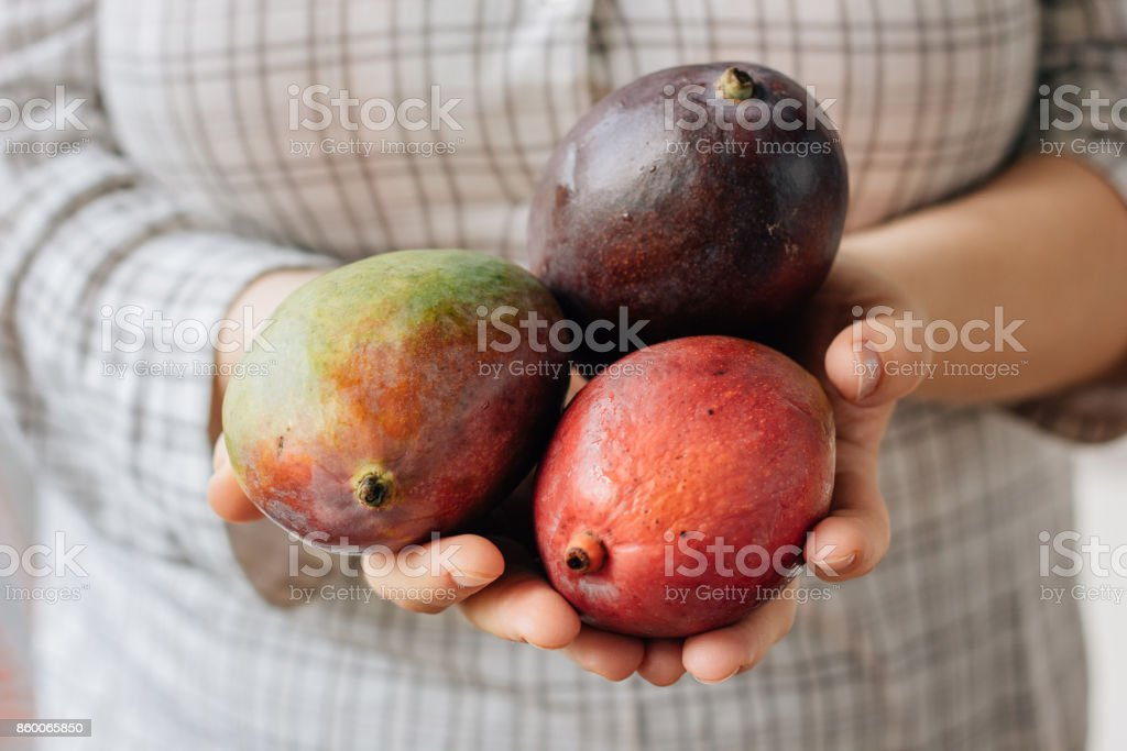 Woman holding three ripe mango in her hands. stock photo
