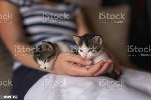 Woman holding two cute kittens picture id1159587307?b=1&k=6&m=1159587307&s=612x612&h=sd e9nsa5adml3gxb9q4w dkms 7jsoazyex54qd lk=