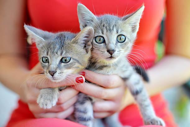 Woman holding two cute kittens picture id585513724?b=1&k=6&m=585513724&s=612x612&w=0&h=u3hajqmzs9llqkw3bcufqvdx5p8onagbebawv09vply=