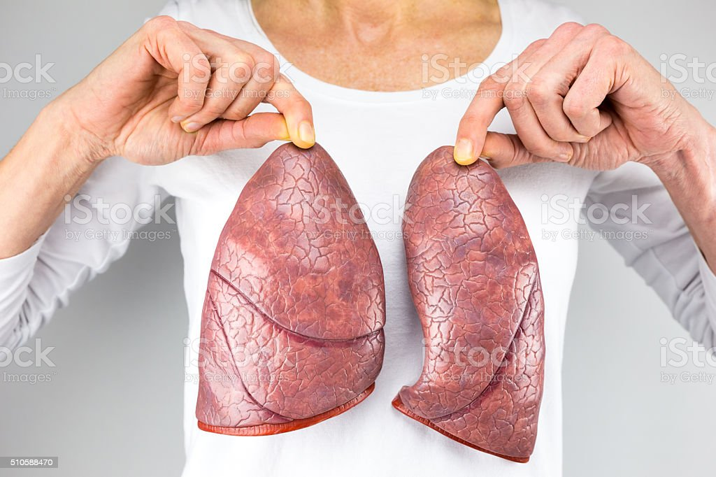 Woman holding two lung models in front of chest stock photo