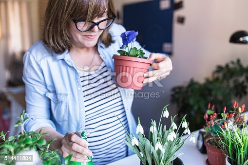 Woman holding Viola in her hands and watering the rest of her flowers