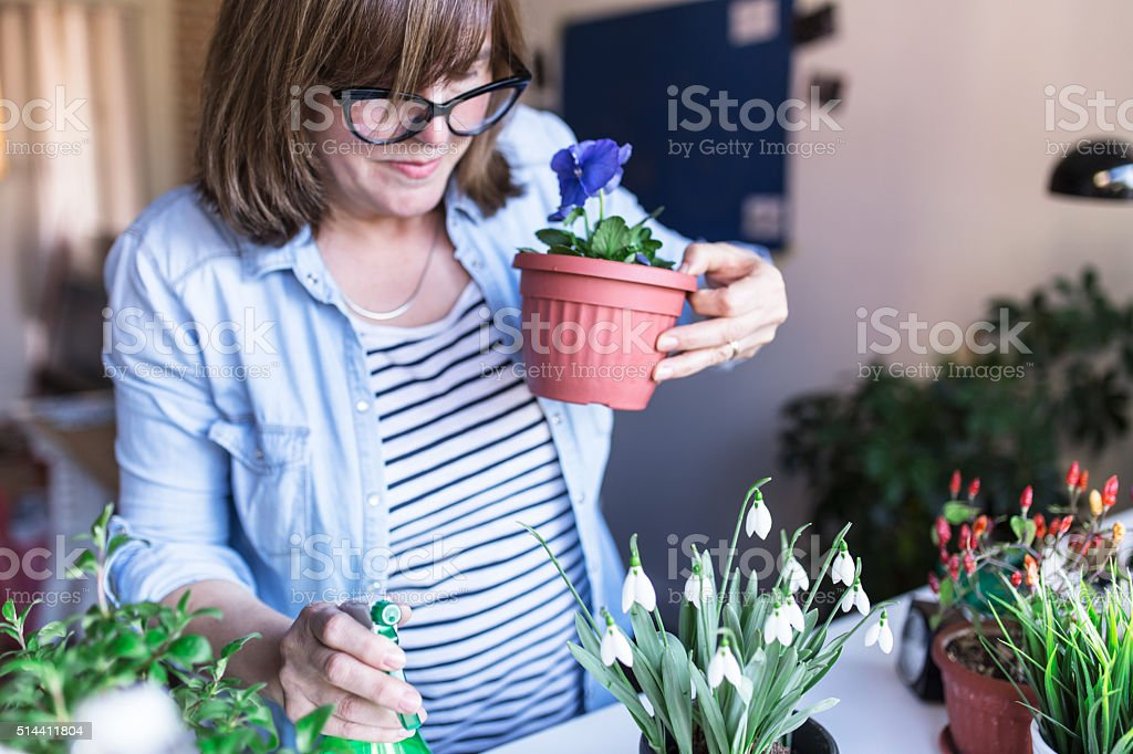 Woman holding Viola flower in her hands stock photo