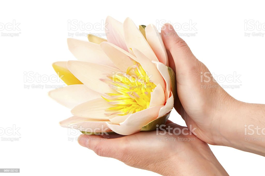Woman holding waterlily royalty-free stock photo