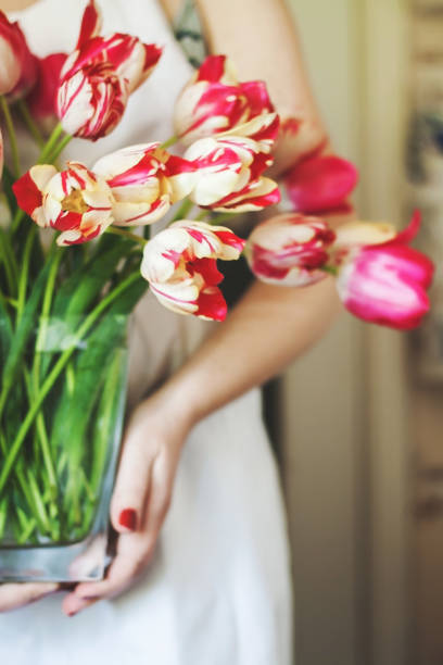 Woman holds a vase with a large bouquet of fresh pink tulips picture id645656244?b=1&k=6&m=645656244&s=612x612&w=0&h=d7zllv0tct1blgwxgykif al4sxbwqd4am vng341ra=
