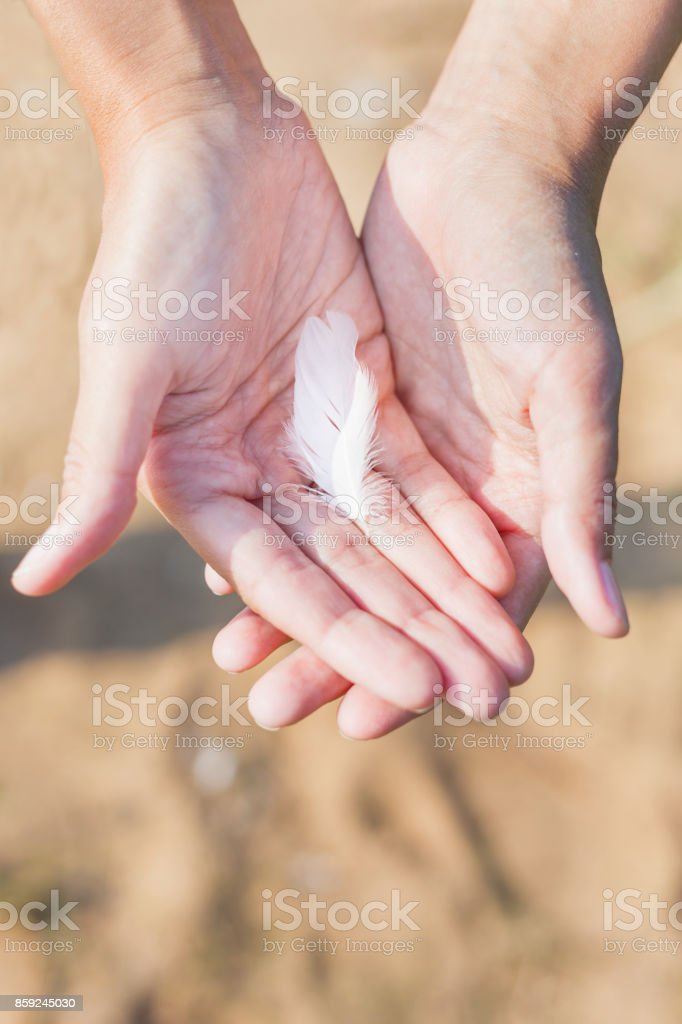 Woman holds a white feather of a seagull in hand. Symbol of lightness and fragility. Top view. stock photo