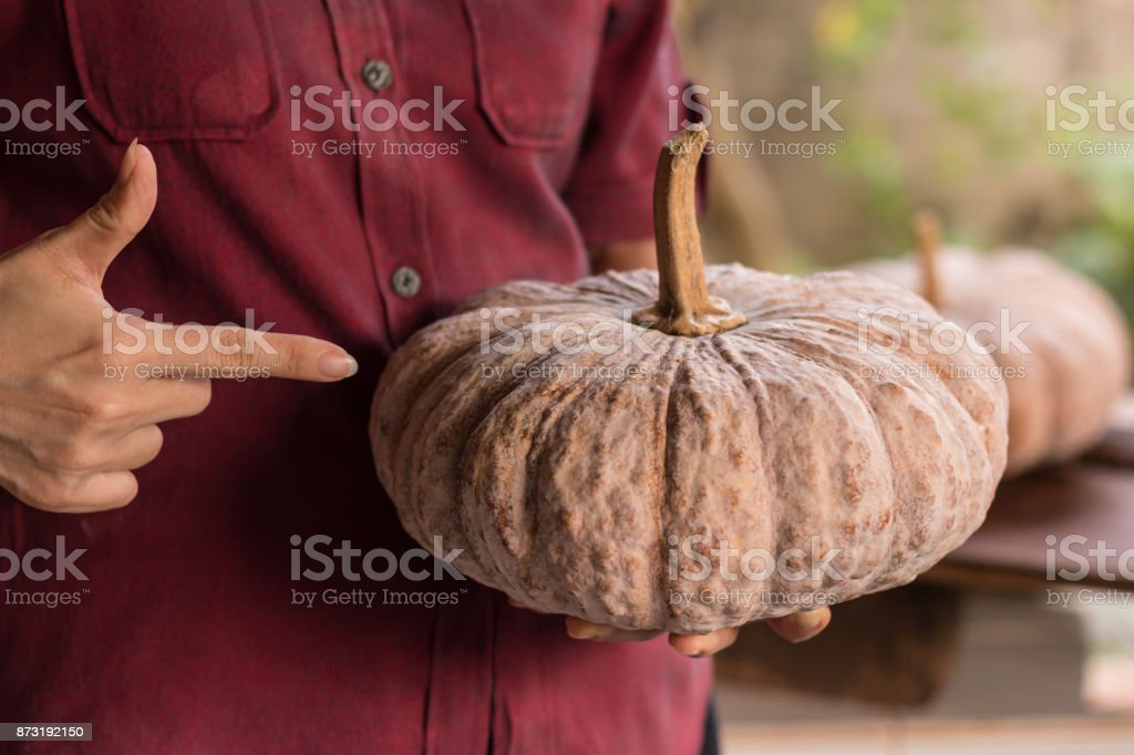 Woman holds pumpkin in her hands. Close up studio shoot stock photo