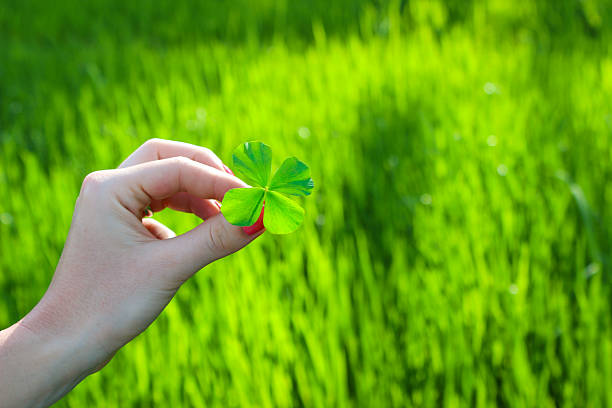 woman holidng a four leaf clover - luck of the irish stock photos and pictures