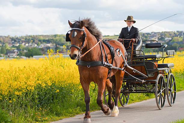 frau pferdekutsche - pferdekutsche stock-fotos und bilder