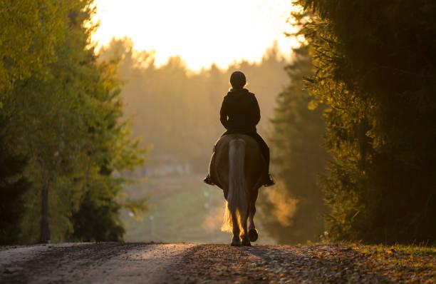 秋の乗馬女性 - 乗馬 ストックフォトと画像