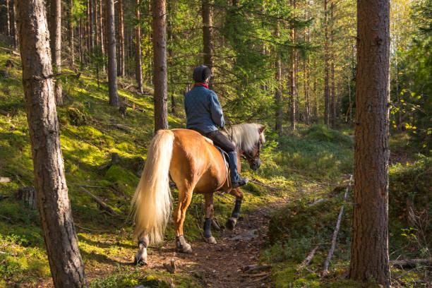 woman 乗馬森林のコース - 乗馬 ストックフォトと画像
