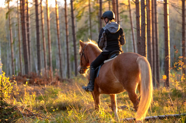 Woman horseback riding in forest stock photo