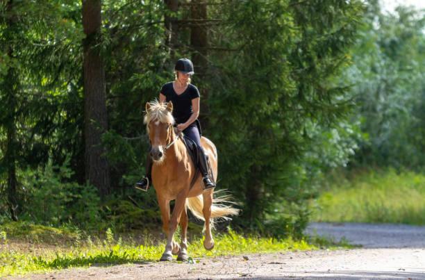 乗馬森林の女性 - 乗馬 ストックフォトと画像