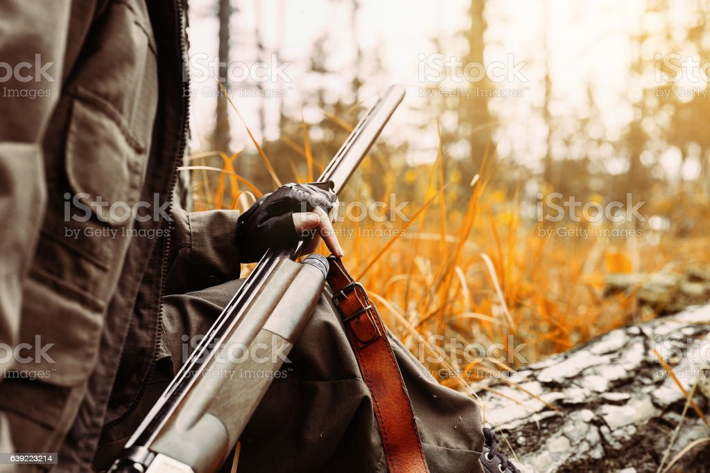 Woman hunter with a gun. Hunting in the woods. stock photo