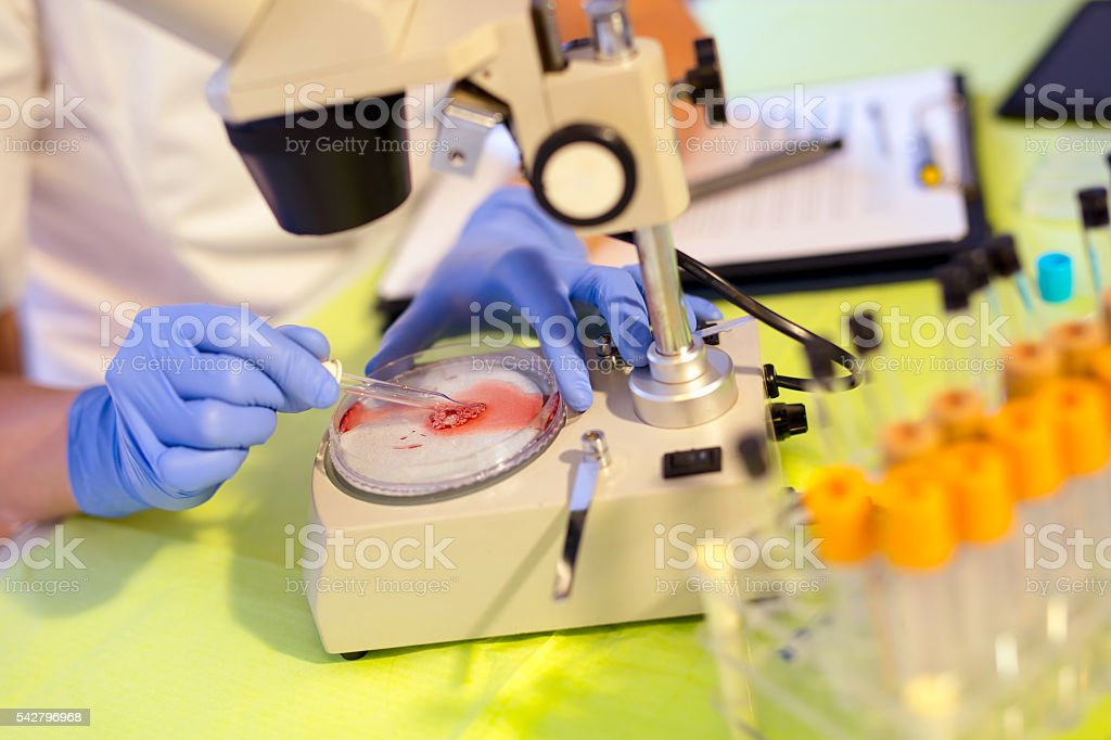 Woman in a laboratory working with a microscope stock photo