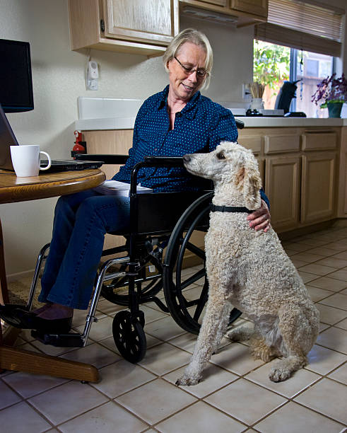 Woman in a wheelchair stroking her dog stock photo