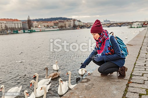 Woman in coat feeding a swans swimming in a river at winter time