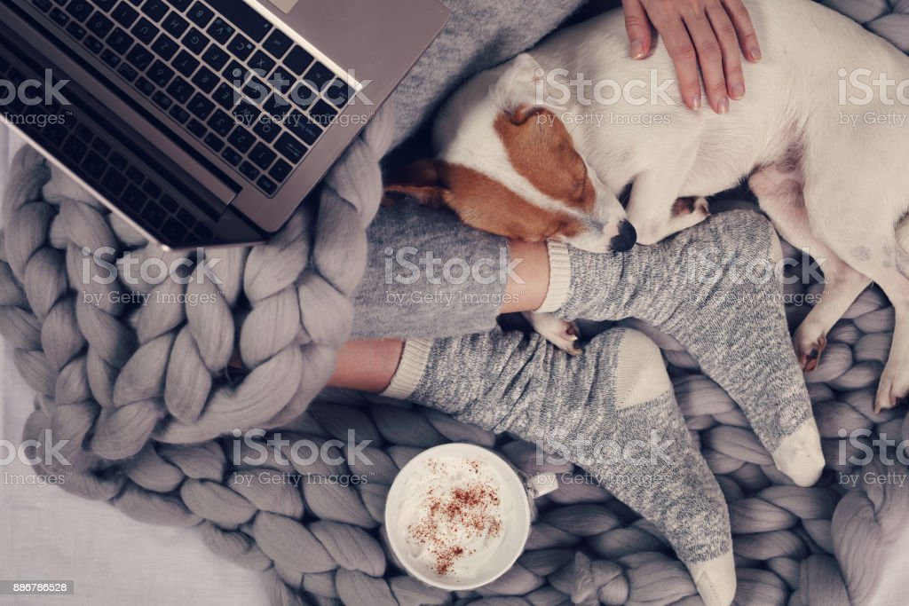 Woman in cozy home clothes relaxing at home with sleeping dog Jack Russel Terrier, drinking cacao, using laptop, top view. Comfy lifestyle. stock photo