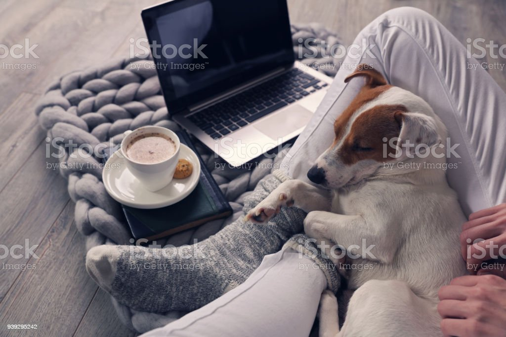 Woman in cozy home wear relaxing at home ,drinking cacao, using laptop. Soft, comfy lifestyle. stock photo