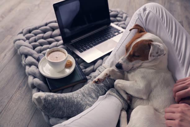 femme en homewear confortable de détente à la maison, boisson cacao, à l'aide d'ordinateur portable. mode de vie doux et confortable. - tasse flat photos et images de collection