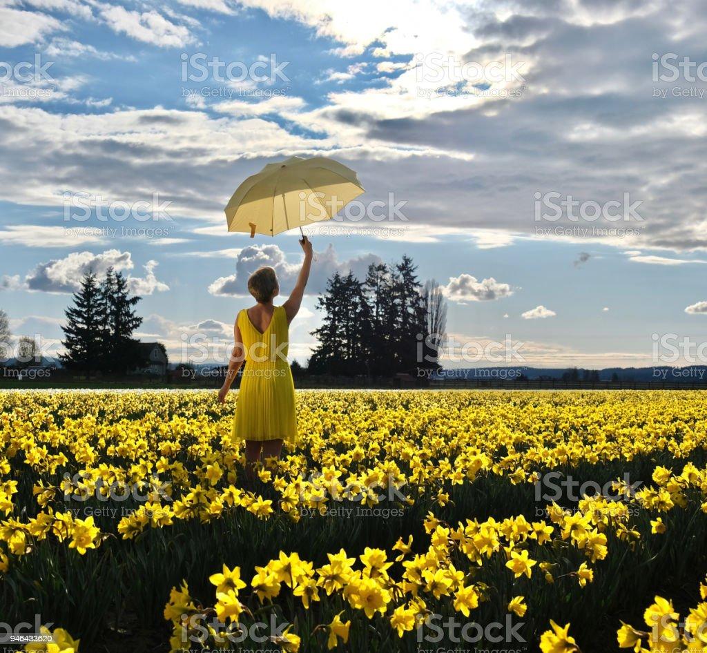 Frau auf Narzissen Gebiet mit gelben Regenschirm. – Foto