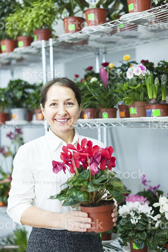 woman in flower shop with Cyclamen royalty-free stock photo